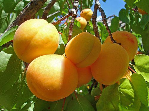 Персиковое повидло
